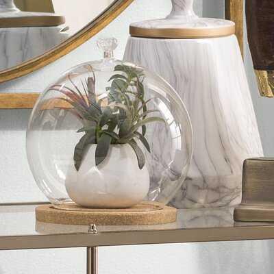 Arnau Glass Cloche - Wayfair