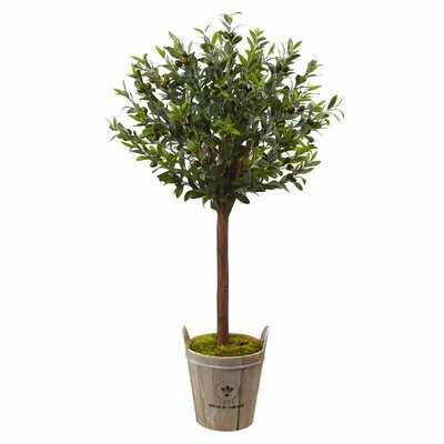Olive Tree in Planter - Birch Lane