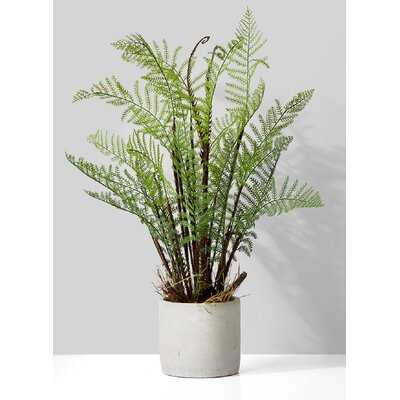 Fern Succulent Pot - Wayfair