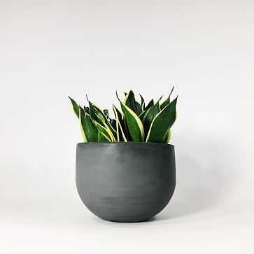 "SETTLEWELL Concrete Bowl Planter, 6"", Dark Gray - West Elm"