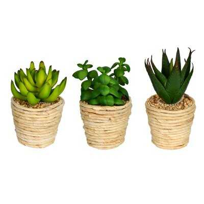 3 Artificial Succulent in Pot Set - Wayfair
