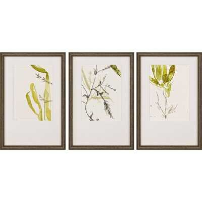 'Sea Forest II S/3' by Goldberger - 3 Piece Picture Frame Print Set on Paper - Wayfair