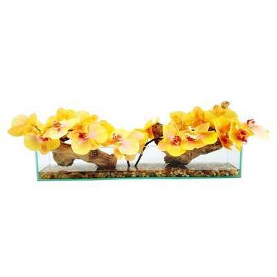 Phalaenopsis Orchid Floral Arrangement in Glass Vase - Birch Lane