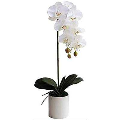 Artificial Orchid White In Pot 1 Stem Artificial Phalaenopsis Orchids Flowers With White Vase, Decoration For Home Office Living Room - Wayfair