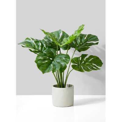 Evergreen Plant Pot - Wayfair