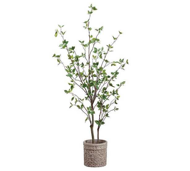 """Faux Cornus Tree In Terra Cotta Planter, 60"""" - Pottery Barn"""