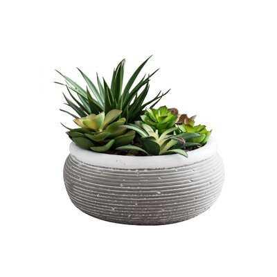 4.5'' Artificial Succulent in Pot - Wayfair