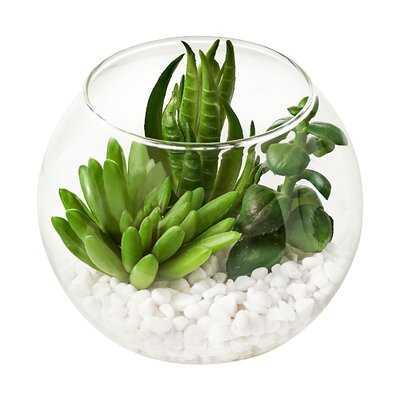 3 - Piece Artificial Succulent Plant in Pot Set - Wayfair