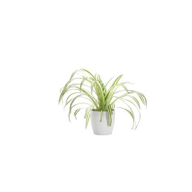 "Thorsen's Greenhouse 11"" Live Spider Plant in Pot Base Color: White - Perigold"
