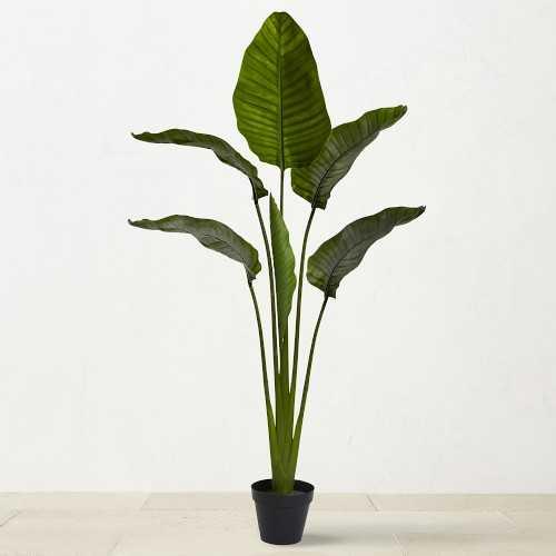 "UV Resistant Travelers Palm Tree, 60"" - Williams Sonoma"