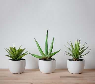 Southwest Succulent Collection - Pottery Barn Kids