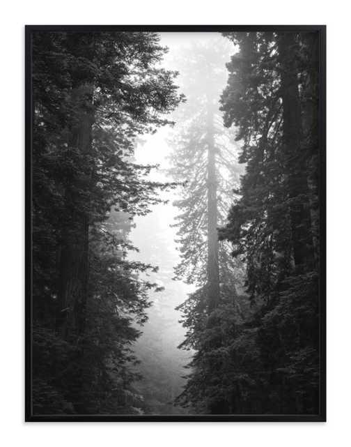 Redwood Morning Art Print - Minted