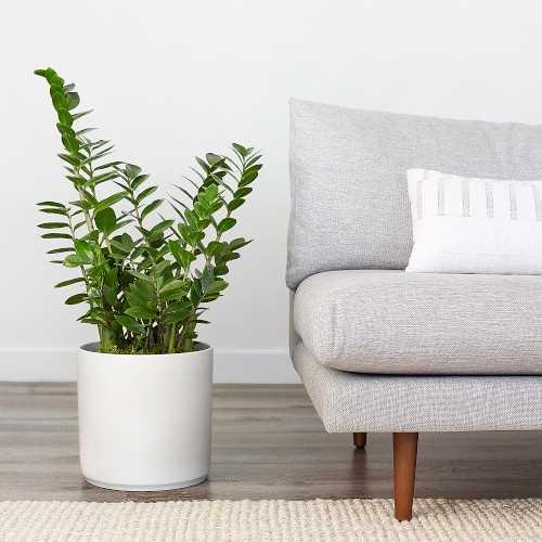 "Revival Ceramics White Planter Pot, 10"" - Williams Sonoma"