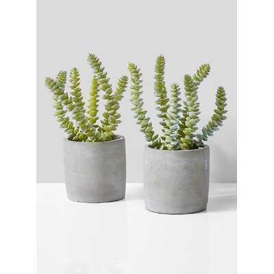 Evergreen Succulent Pot Set - Wayfair