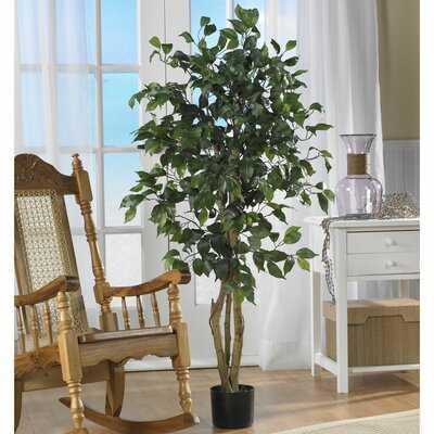 Ficus Silk Tree in Planter - Wayfair