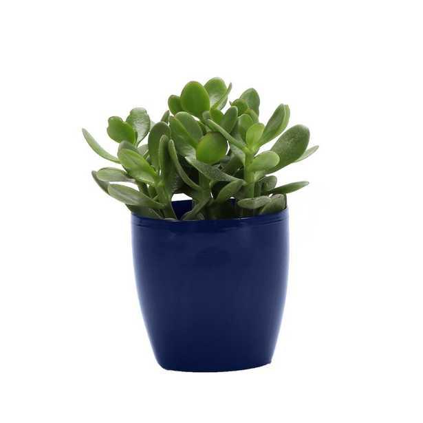 "Thorsen's Greenhouse 4"" Live Foliage Plant in Pot Base Color: Iris - Perigold"