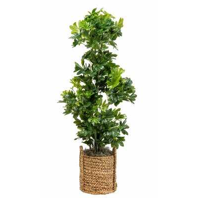 "66"" Artificial Foliage Tree in Basket - Wayfair"