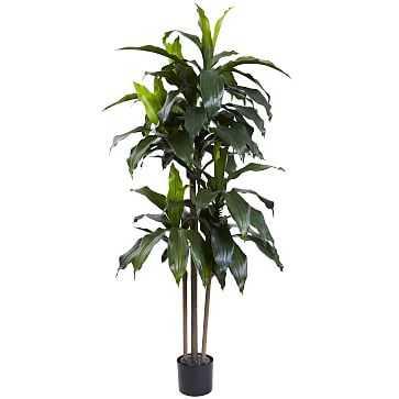 Dracaena Plant UV Resistent, 5 feet - West Elm