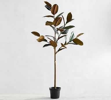 Faux Variegated Rubber Tree, Dark Green, Large - Pottery Barn