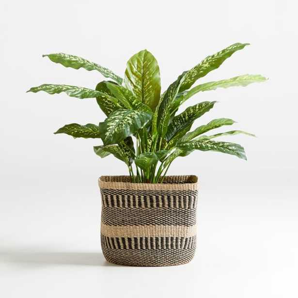 "42"" Faux Dieffenbachia Plant - Crate and Barrel"