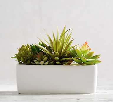 Faux Potted Succulents Set, Multi - Pottery Barn