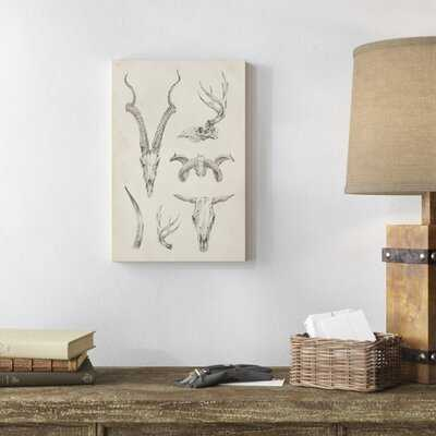 'Skull and Antler Study I' Graphic Art on Canvas - Wayfair