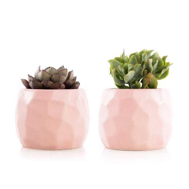 KAWAHARA NURSERY 2.5in Assorted Succulent Set in Pink Geometric Pot (2-Pack) - Home Depot