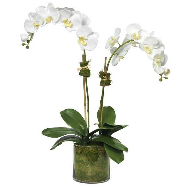 Diane James Home Phalaenopsis Orchid Floral Arrangement in Vase - Perigold