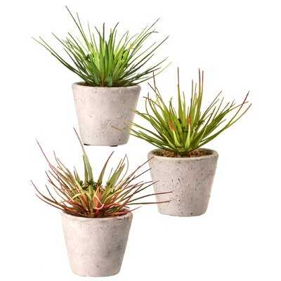 3 3'' Artificial Agave Plant in Pot - Wayfair