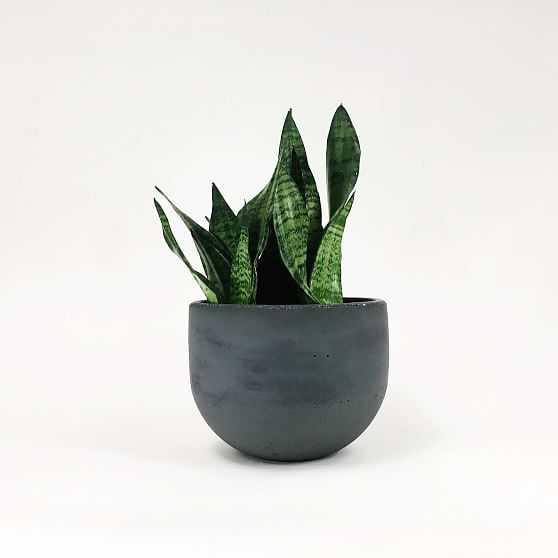 "SETTLEWELL Concrete Bowl Planter, 9"", Dark Gray - West Elm"