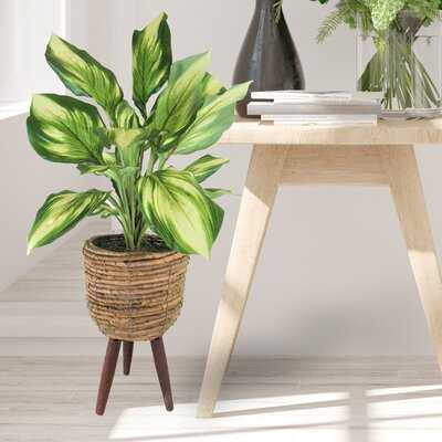 "22"" Artificial Foliage Plant In Basket - Wayfair"