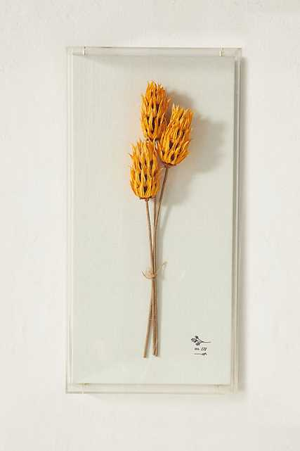 Dried Botanical Wall Art By Anthropologie in Orange Size S - Anthropologie