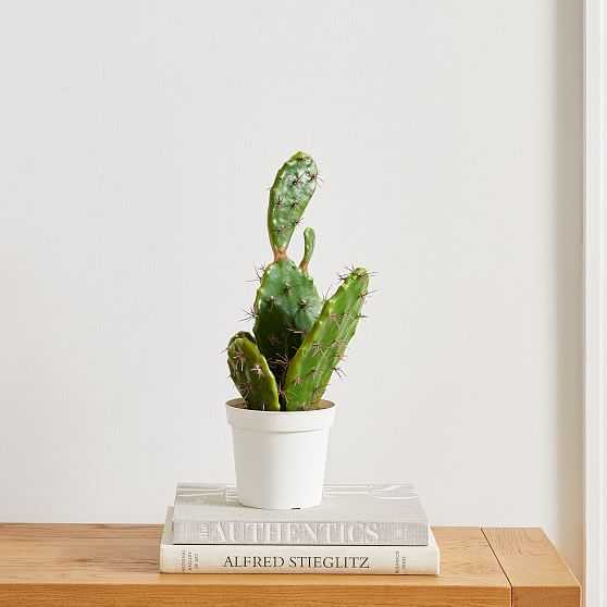 Faux Potted Flat Cactus, 19in - West Elm