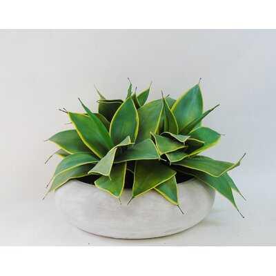 "7"" Artificial Agave Succulent in Planter - Wayfair"