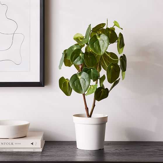 Faux Potted Pilea Peperomiodes, 23.5in - West Elm