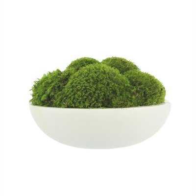 Natural Moss In White Large Bowl - Wayfair