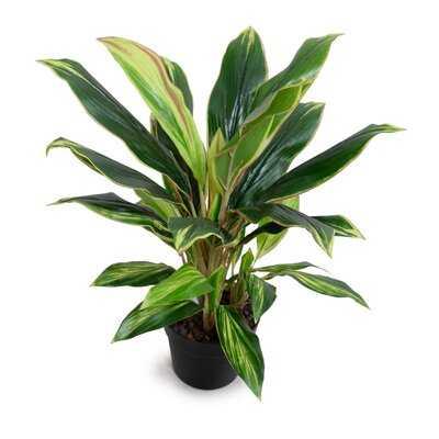 Artificial Aspidistra Plant in Pot - Wayfair