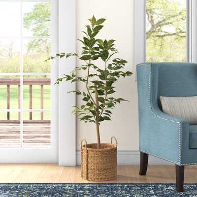 Nandina Foliage Tree in Pot - Wayfair