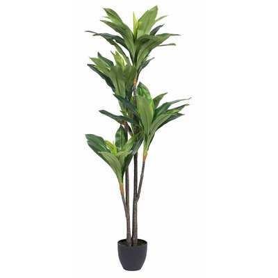 Dracaena Tree in Pot - Wayfair