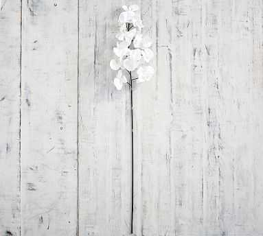 Faux Phalaenopsis Orchid Stem, White, One - Pottery Barn