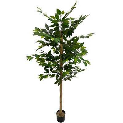 6-Foot Ficus Tree In Pot - Wayfair