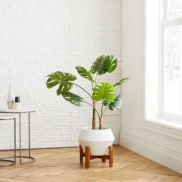 Monstera Botanical + Ilya Planter Small White Bundle - West Elm