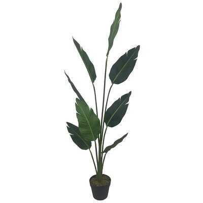 "60"" Artificial Banana Leaf Tree in Pot - Wayfair"