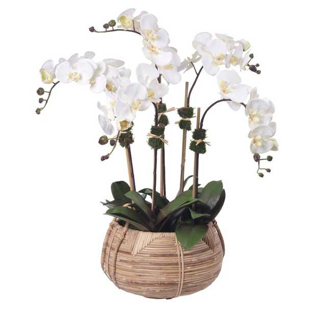 Diane James Home Cream Phalaenopsis Orchids In Cane Basket - Perigold