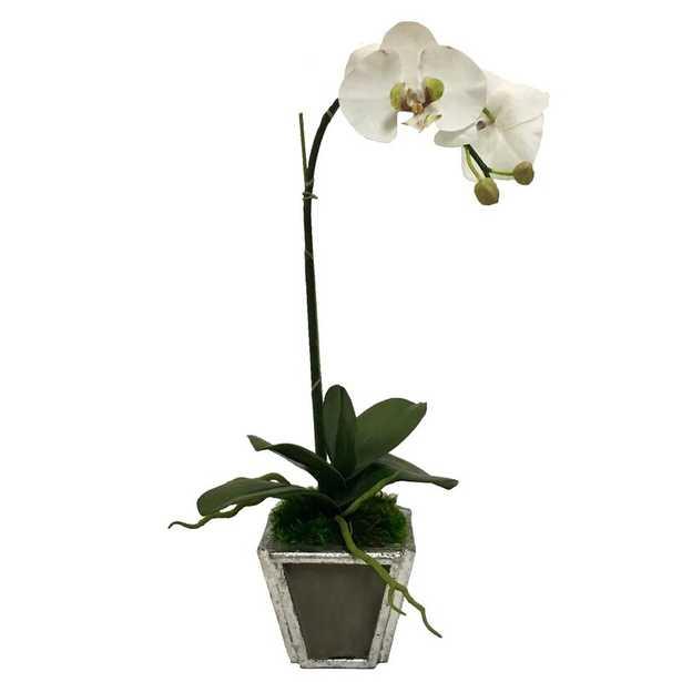 Wooden Small Container Silver W/ Antique Mirror - White & Green Orchid Artificial Base Color: Dark Gray - Perigold