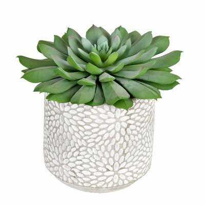 Artificial Succulent in Pot (Set of 2) - Wayfair