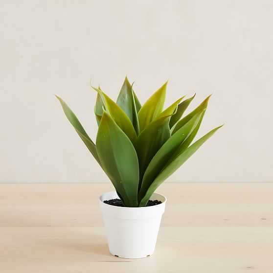 """Faux Potted Agave, 12"""" - West Elm"""