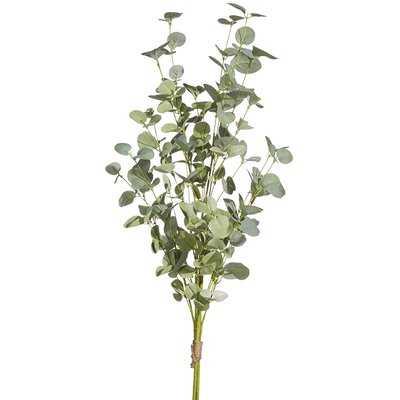 Bundle Eucalyptu Plant - Wayfair