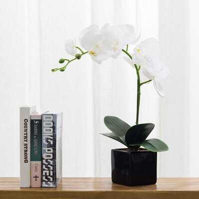 Phalaenopsis Orchid Floral Arrangement In Planter - Wayfair
