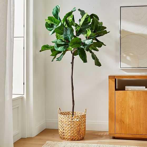 Faux 7' Fiddle Leaf Fig & Large Open Weave Zig Zag Basket Planter Set - West Elm